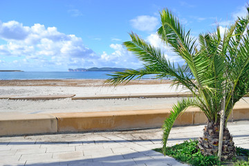 small palm tree by Alghero shoreline