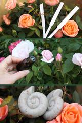 Aromathérapie - Rose -  Huile essentielle