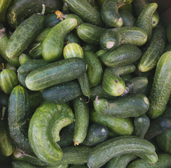 cucumbers background