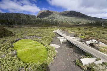 Walking path in mossy land in national park in Tasmania