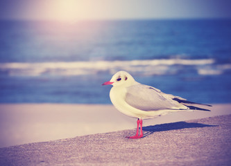 Vintage filtered picture of a seagull.
