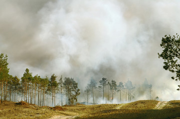 Emergency: smoke from burning wood between fir trees