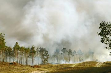 Emergency: smoke from burning wood between fir trees