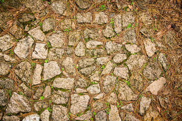 texture of natural stone and pine needles