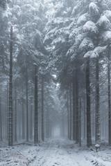 mystischer Winterwald