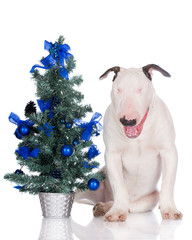 funny white puppy with a christmas tree