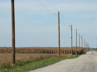 Many power line poles in a row on a rural road