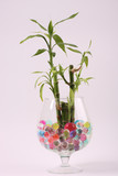 Beautiful flowers in vases with hydrogel  poster