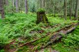 Forest regeneration poster