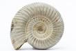 Leinwandbild Motiv Perisphinctes, ammonite fossile, Madagascar