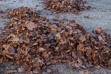 Mucchio di foglie secche, autunno