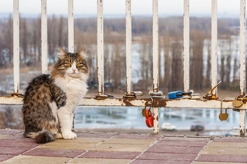Cat on a background of a fence with padlocks