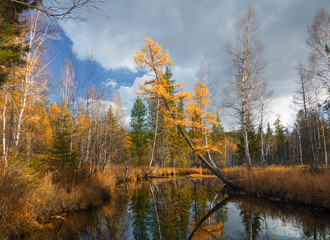 Autumn River Olha in eastern Siberia
