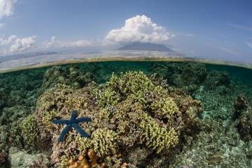 Starfish, Reef, and Volcano