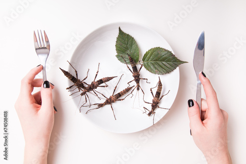 Plate full of insects in insect to eat restaurant - 74508418