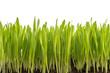 Leinwandbild Motiv Gras