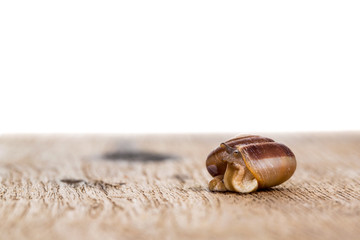 snail on the table