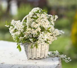 bouquet spring flowers