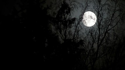 Full moon at a night leafless forest.