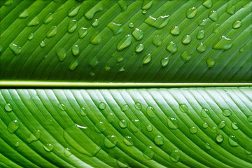 Vibrant leaf with waterdrops