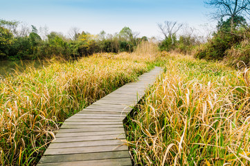 China hangzhou xixi wetland of autumn scenery