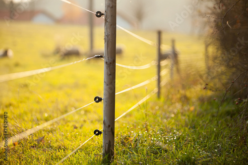 Electric fencing around a pasture with farm animals - 74521470