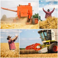 Wheat harvest collage