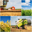 Wheat harvest - collage