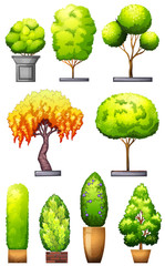 Sets of decorative plants