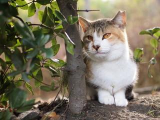 垣根から顔を覗かせる猫