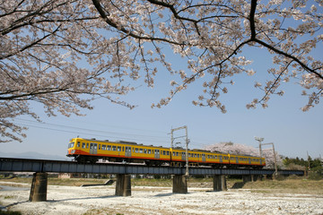 桜と三岐鉄道