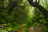 Fototapety Selva Nepal