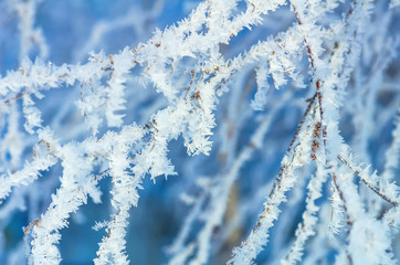 Tree branch in Crystal frost