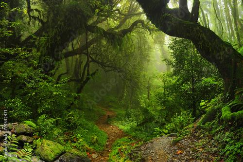 Plagát Selva Nepal