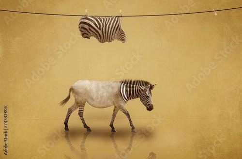 Deurstickers Zebra Veränderungen