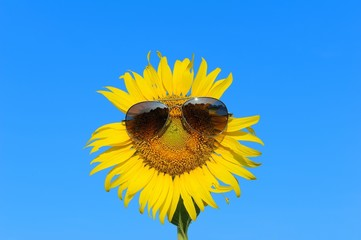 Smiley Sunflower wearing sunglasses