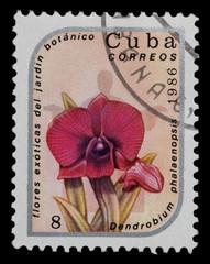 exotic flowers in botanical gardens