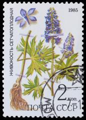 medicinal plant from Siberia