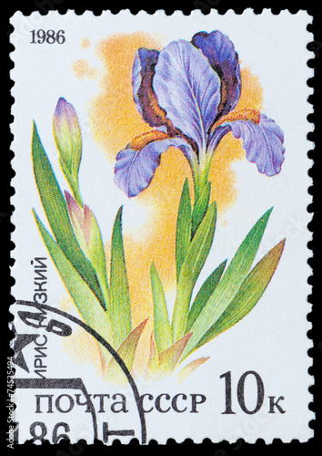 Foto op Canvas Iris Plants of Russian Steppes