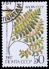 Flora USSR