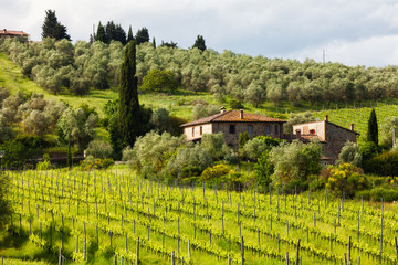 Summer rural landscape with vineyards in Tuscany, Italy