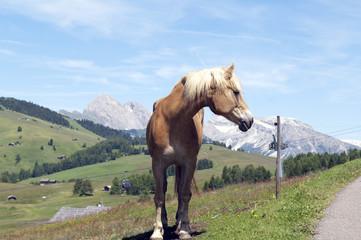 Pferd; Pferdekopf;