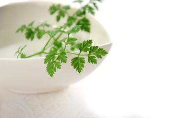 chervil leaves in white background