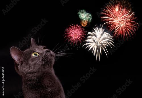 Katze mit Feuerwerk - 74538458