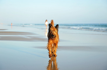 Walking on the beach with the dog, Tarifa, Spain