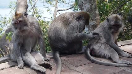 Three funny monkeys.