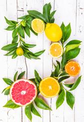 Citrus fruits on white background.