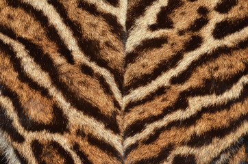 ocelot fur coat