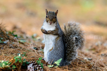 scoiattolo 3