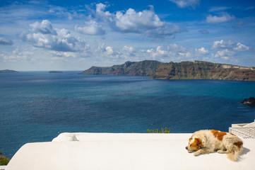 Sleepy dog in Santorini